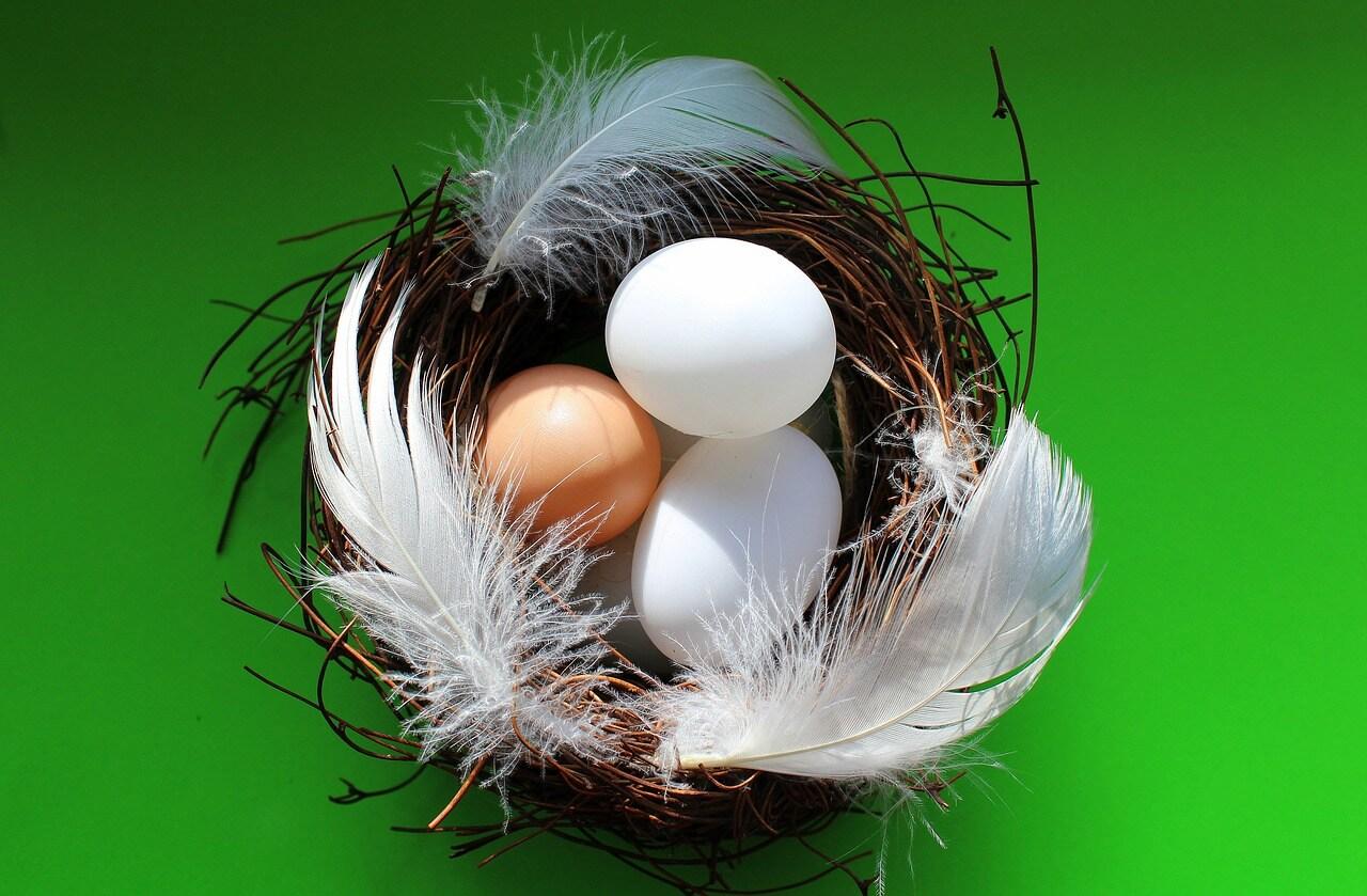 eggs-3152336_1280