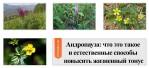 Андропауза: что это такое и естественные способы повысить жизненный тонус