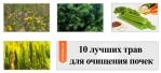 10 лучших трав для очищения почек